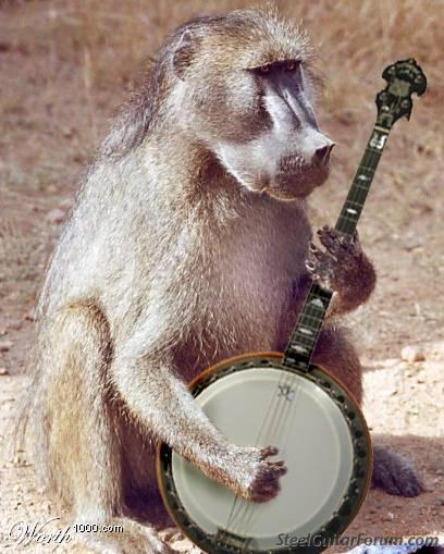 Test II 3095_baboon_banjoist_1